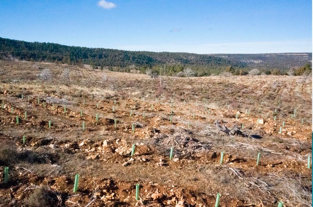 La segunda edición del #BosqueSpringfield plantará 20.000 árboles en Galicia