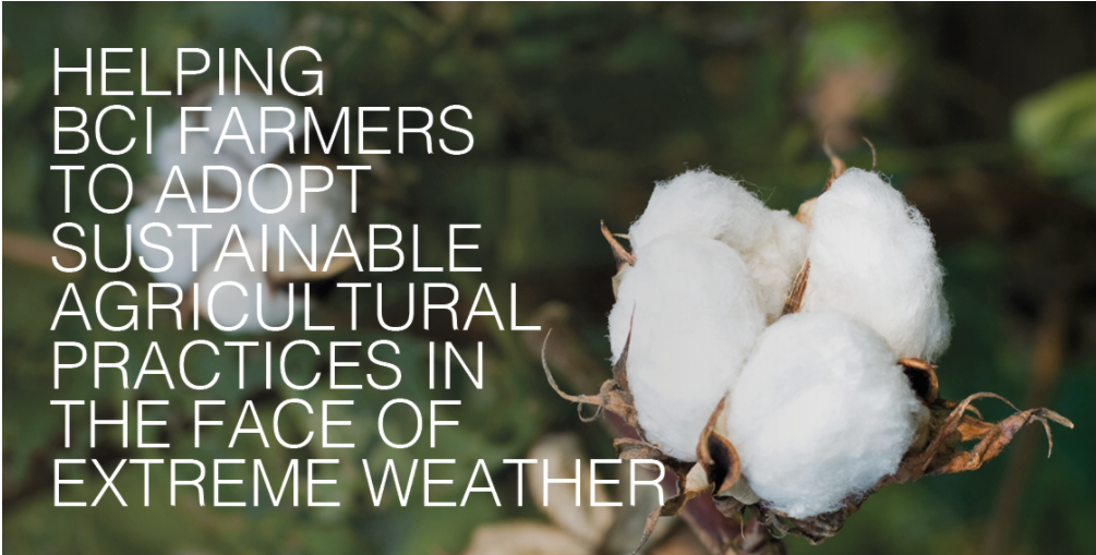 Tendam adheres to Better Cotton Initiative to improve cotton farming globally