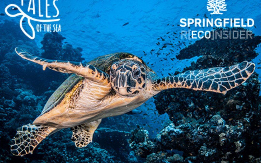 Springfield y la organización Plastic Free apoyan la recuperación de tortugas marinas de la Fundación Oceanogràfic